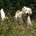 Welpenverkauf Checkliste für Hundezüchter